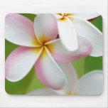 Plumeria Frangipani Hawaii Flower Customized Blank Mousepad