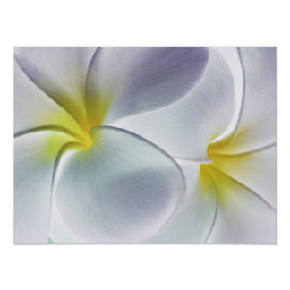 Plumeria Frangipani Hawaii Flower Customized Blank Poster