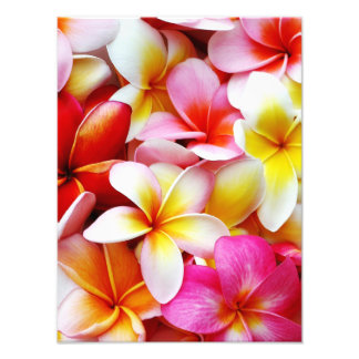 Plumeria Frangipani Hawaii Flower Customized Photo Print