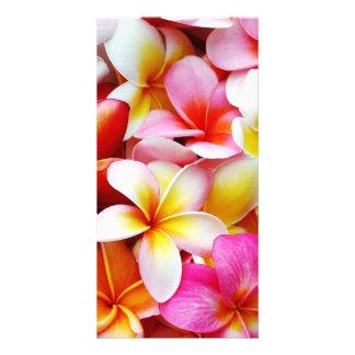 Plumeria Frangipani Hawaii Flower Customized Photo Cards