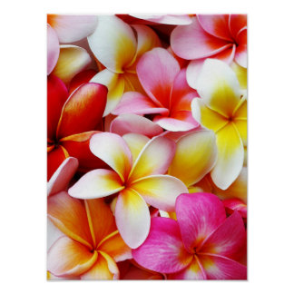 Plumeria Frangipani Hawaii Flower Customized Poster