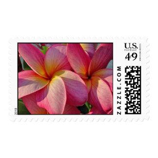 Plumeria - Hanna Pink Glow - Hawaiian Flowers Stamp