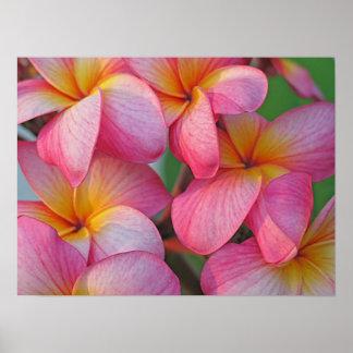 Plumeria - Hanna Pink Glow Posters