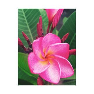 Plumeria hawaiano del rosa del Frangipani Impresión En Lienzo