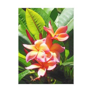Plumeria hawaiano lienzo envuelto para galerías