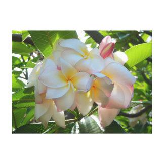 Plumeria hawaiano lona envuelta para galerías