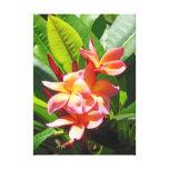 Plumeria hawaiano lona estirada galerías