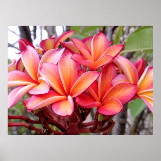 Plumeria hawaiano poster
