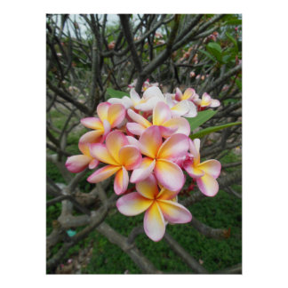 Plumeria hawaiano posters
