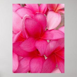 Plumeria hawaiano impresiones