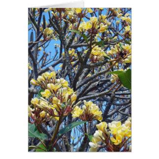 Plumeria hawaiano tarjetón