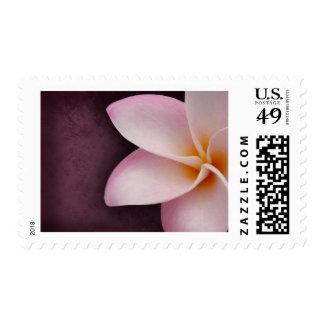 Plumeria in pink postage stamp