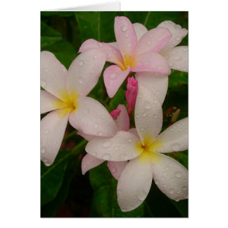 Plumeria in the Rain Card