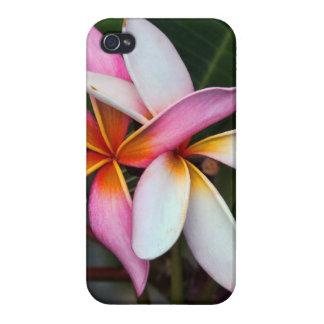 Plumeria Cases For iPhone 4