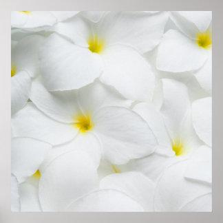 Plumeria Lei Flowers Personalized Hawaiian Flower Poster