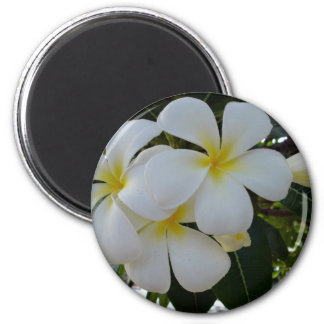 Plumeria 2 Inch Round Magnet