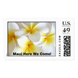 ¡plumeria, Maui aquí venimos! Estampilla