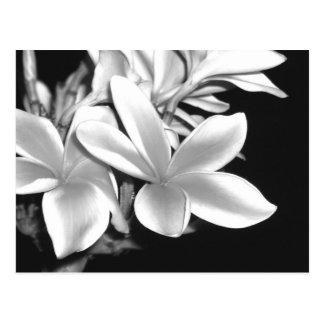 Plumeria negro y blanco tarjetas postales