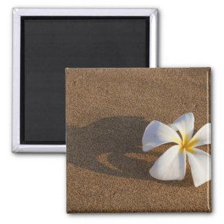Plumeria on sandy beach, Maui, Hawaii, USA 2 Inch Square Magnet