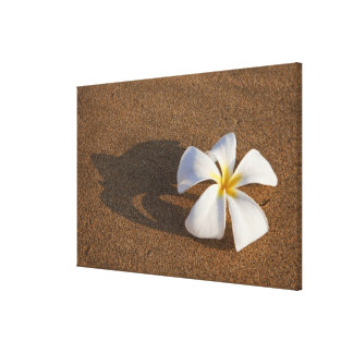 Plumeria on sandy beach, Maui, Hawaii, USA Canvas Print