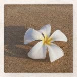 Plumeria on sandy beach, Maui, Hawaii, USA Glass Coaster