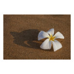 Plumeria on sandy beach, Maui, Hawaii, USA Poster