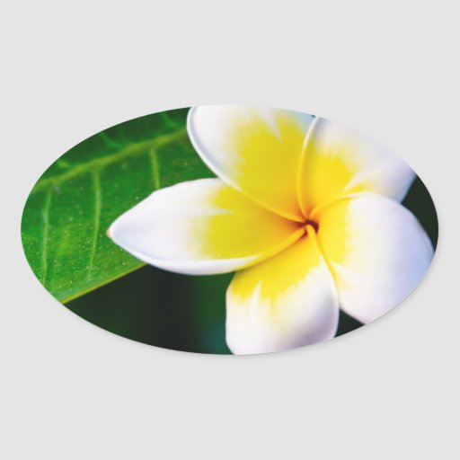 Plumeria Oval Sticker