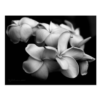 Plumeria postcard..