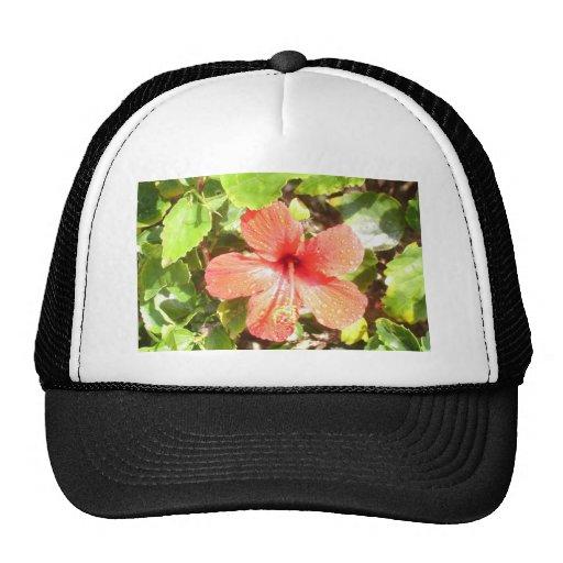 Plumeria rosado gorro