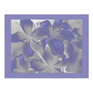 Plumeria Shadows Blue and Gray Postcard