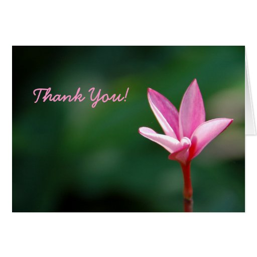 Plumeria Thank You Card