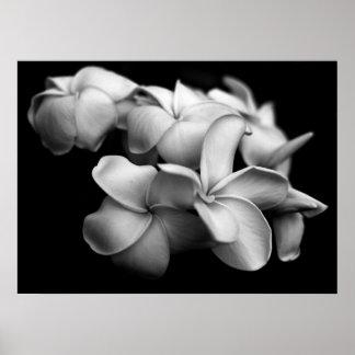 Plumerias en blanco y negro póster