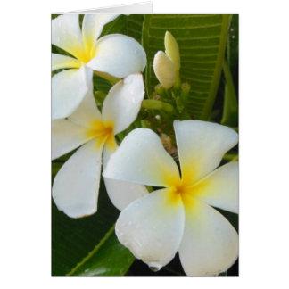 Plumerias en Hawaii Tarjeta