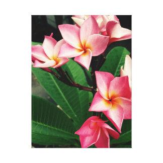 Plumerias hawaianos rosados del Frangipani Impresión En Lienzo