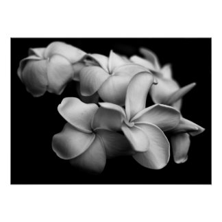 Plumerias in Black and White Poster