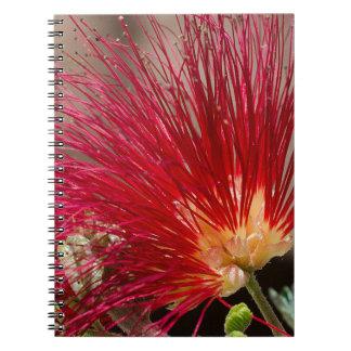 Plumero rojo de la hada de Baja Spiral Notebooks
