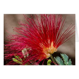 Plumero rojo de la hada de Baja Tarjeta De Felicitación