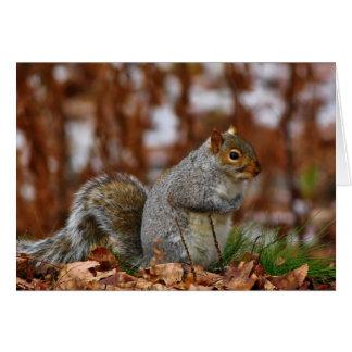 Plump Eastern Gray Squirrel Card