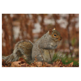 Plump Eastern Gray Squirrel Wood Poster