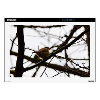 """Plump English Robin Decal For 17"""" Laptop"""