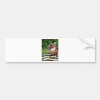 Plump Hummingbird Bumper Sticker
