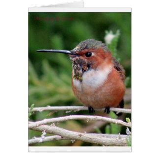 Plump Hummingbird Card