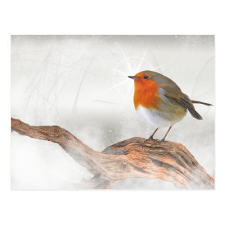 Plump Robin Redbreast Postcard