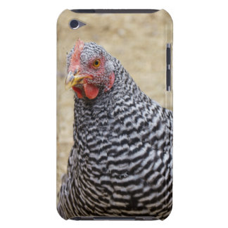 Plymouth Barred Rock Hen Photograph iPod Case-Mate Case