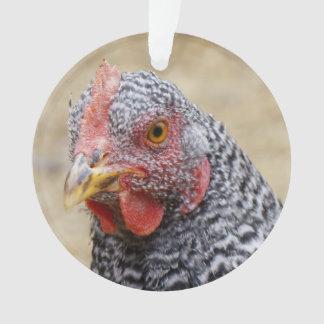 Plymouth barró la fotografía de la gallina de la