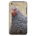 Plymouth barró la fotografía de la gallina de la r iPod Case-Mate cárcasas