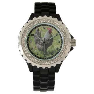 Plymouth Rock Chicken Watch