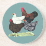 Plymouth Rock Quartet Drink Coasters