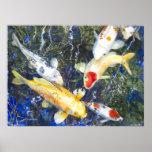 PMACarlson Koi, poster azul profundo