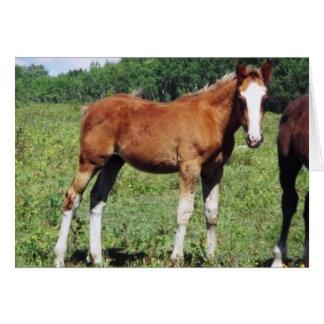 PMU foal Card